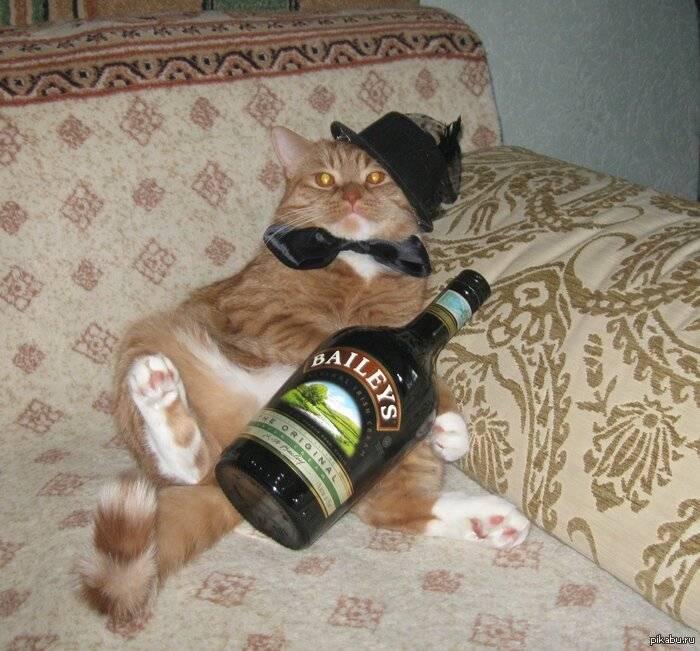 Почему коты и кошки любят валерьянку
