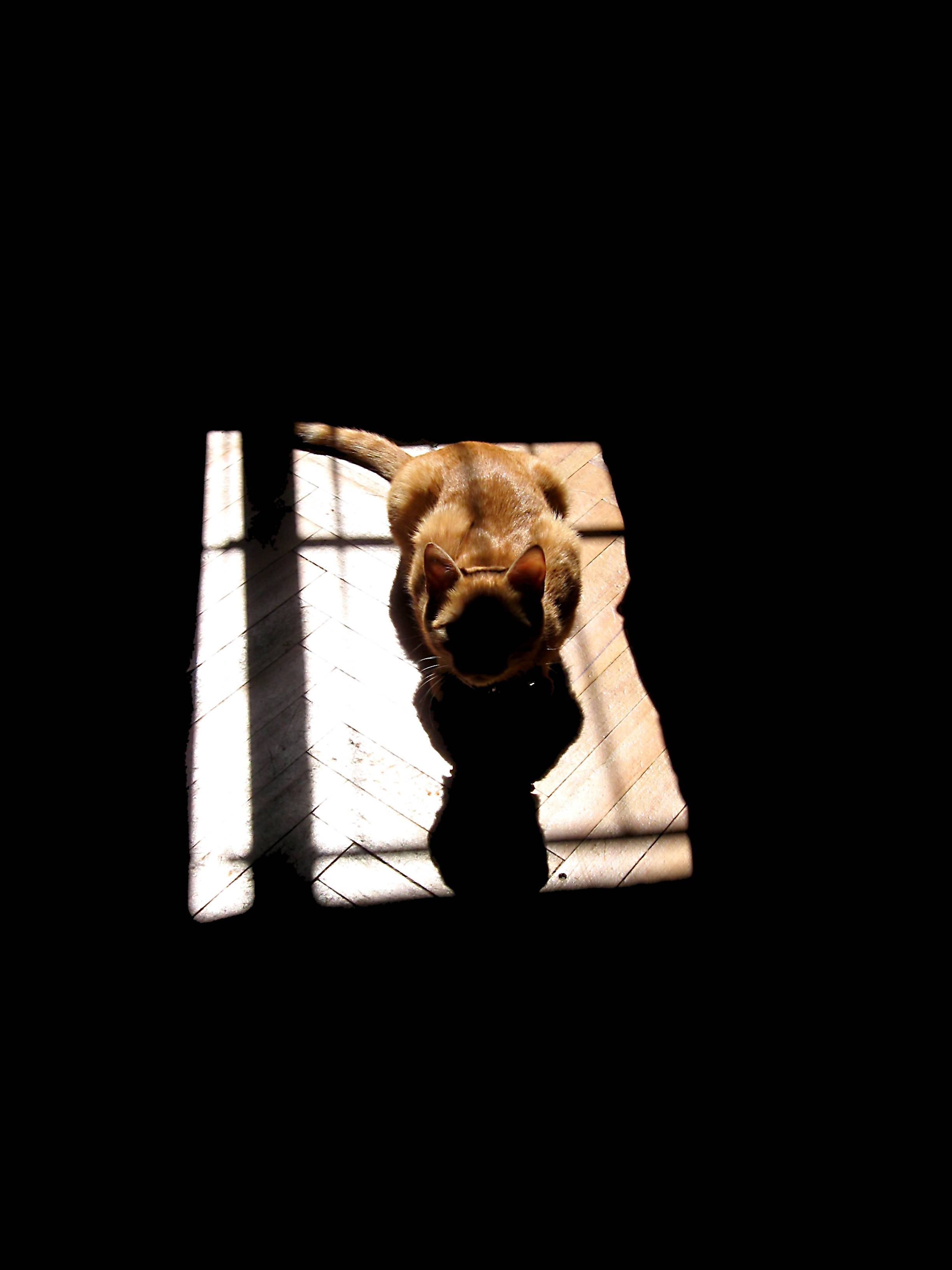 Как пережить смерть питомца | сообщество «домашние и дикие животные» | для мам