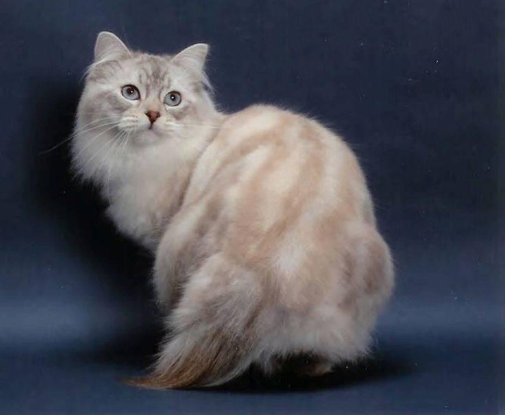 Кошки окраса табби