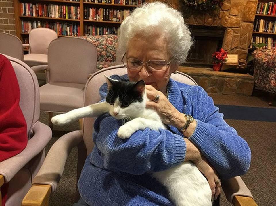 Уход за старой кошкой. советы ветеринара | дети фауны