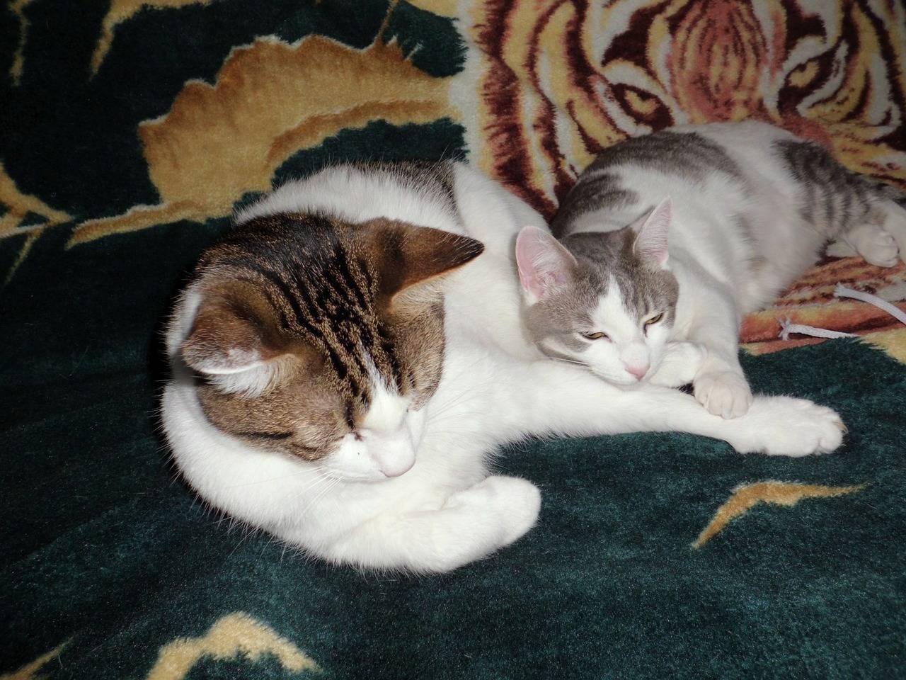 Что делать, если кошка спит на кровати? спать с кошкой – полезно или вредно