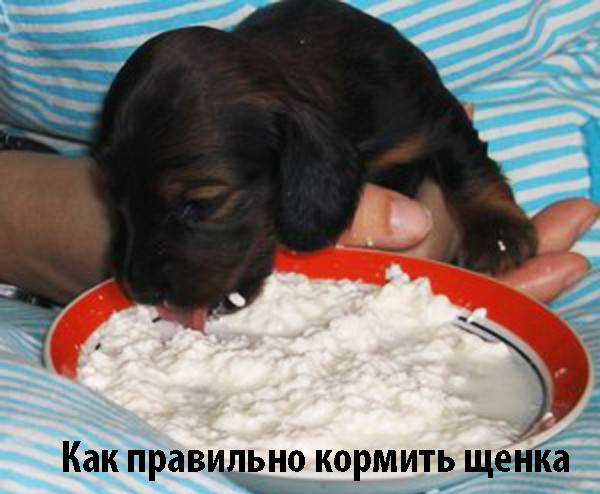 "Чем нельзя кормить собаку | блог ветклиники ""беланта"""