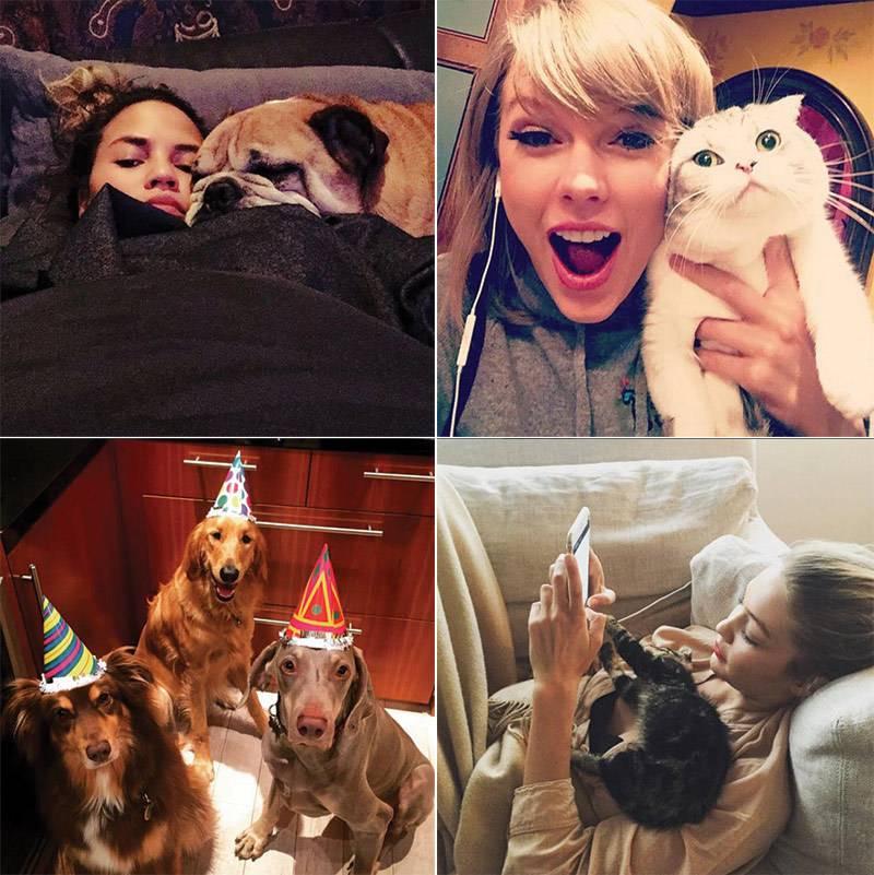 Публичная жизнь домашних животных! топ самых популярных питомцев в instagram   мур тв