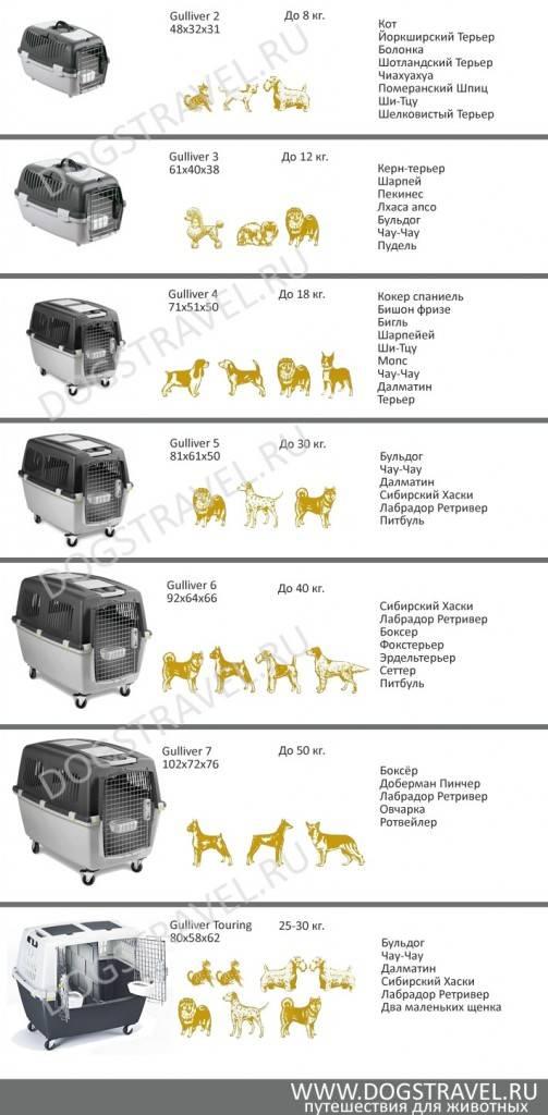 Правила и стоимость перевозки животных в самолете аэрофлота