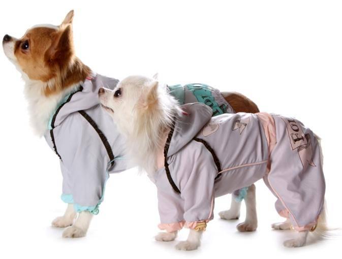 15 лучших моделей одежды для собак - рейтинг 2021 года (топ на январь)