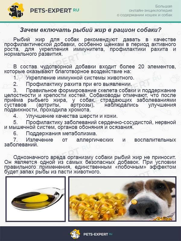 Особенности правильного питания мопсов