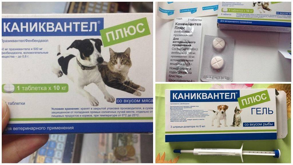 Каниквантел для кошек от глистов: инструкция по применению, дозировки и преимущества препарата