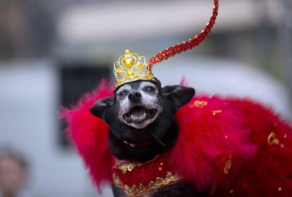 50 самых впечатляющих и ярких фото карнавала в рио > stylefocus.net