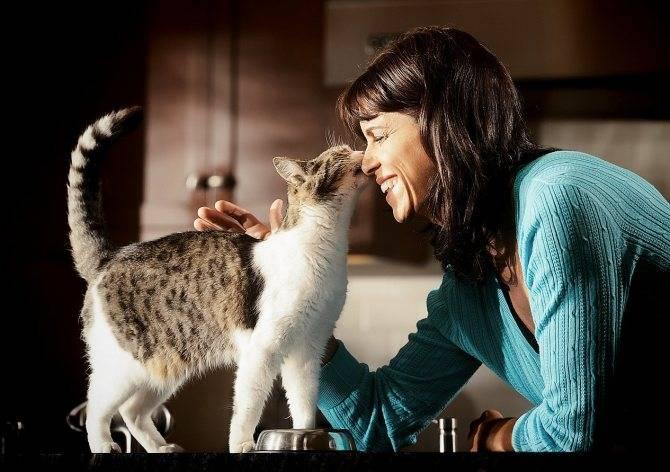 Как приучить кошку к рукам: советы и рекомендации как приучить кошку к рукам: советы и рекомендации