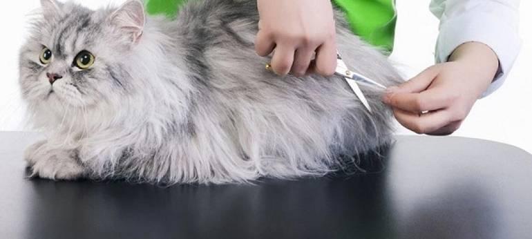 Груминг кошек на дому: виды и особенности кошачьей гигиены