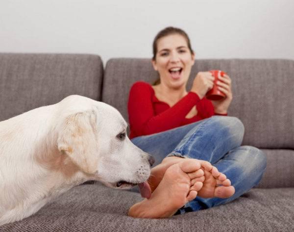 Причины постоянного вылизывания собакой хозяина посторонних людей