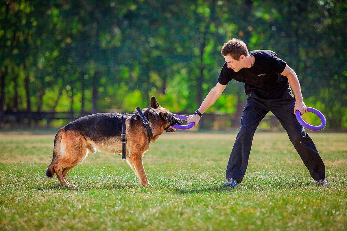 Важная информация о том, как отучить собаку прыгать на людей
