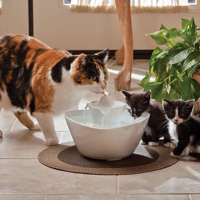Сколько кошка и кот может прожить без еды и воды сколько кошка и кот может прожить без еды и воды