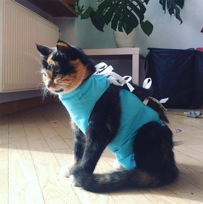 Сколько лет живут кастрированные коты в домашних условиях