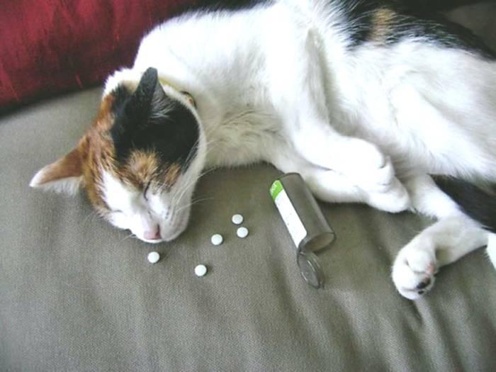 Что нельзя делать с кошками! | кошка в домашних условиях