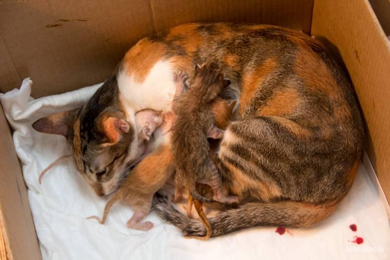 Может ли кошка родить не всех котят сразу: факты