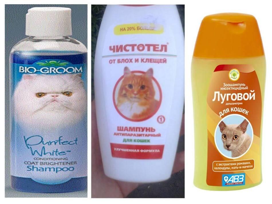 От блох шампунь для котят и кошек какой выбрать — отзывы