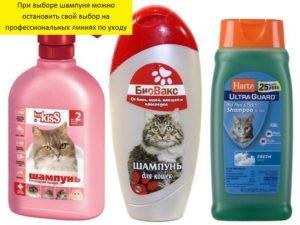 Можно ли мыть кошку обычным шампунем для людей: мнения и советы ветеринаров