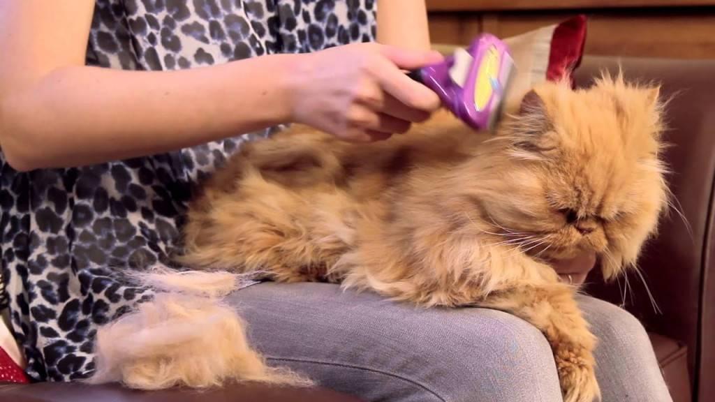 Как стричь длинношерстных кошек
