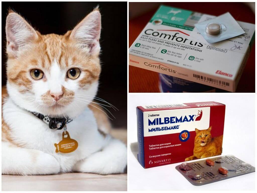 10 лучших средств от клещей для кошек и котят – таблетки, ошейники, спреи, капли на холку, шампуни, инъекции