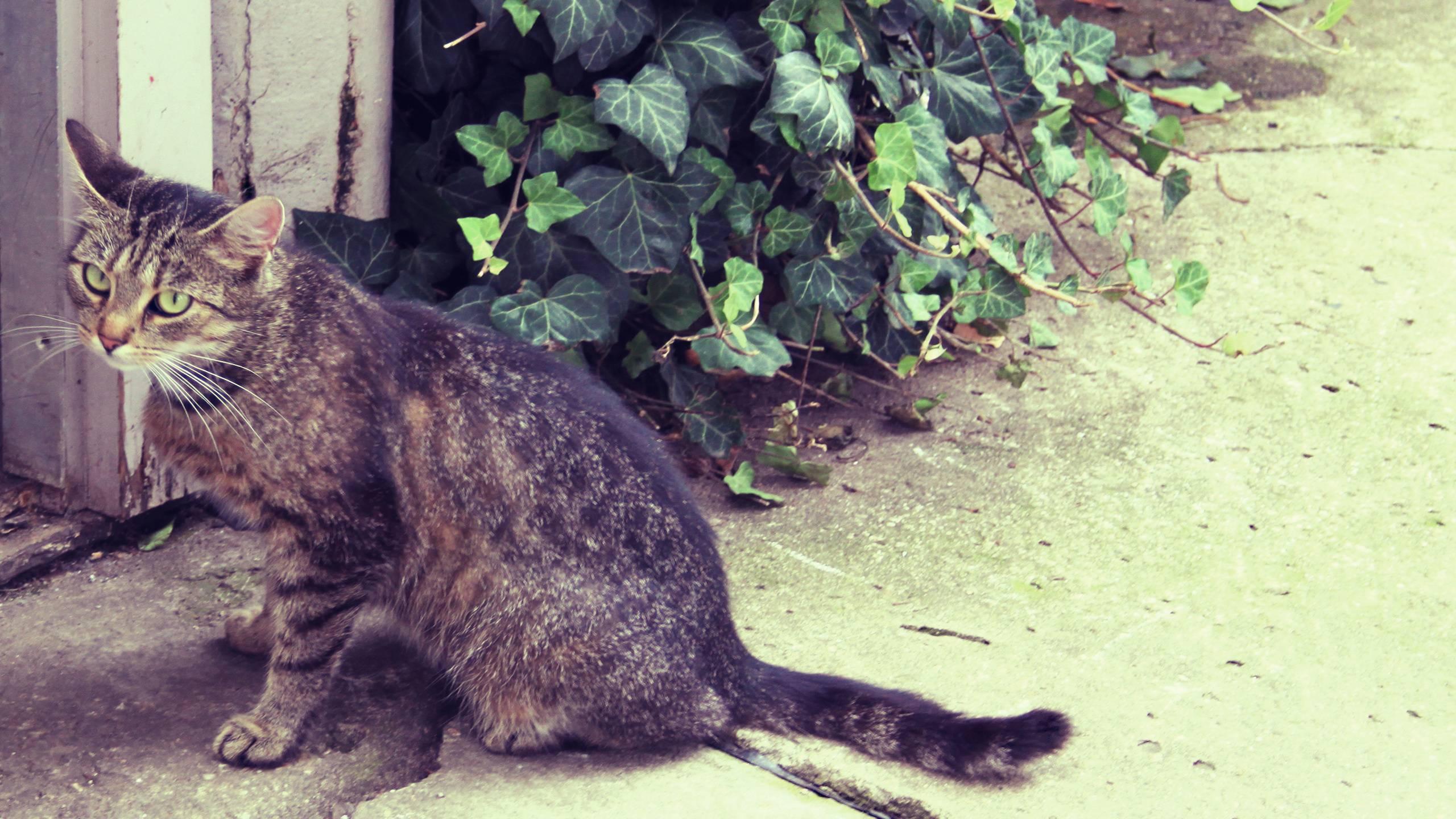 Обыкновенные кошки — домашние питомцы или мистические существа? самые разные приметы про этих животных