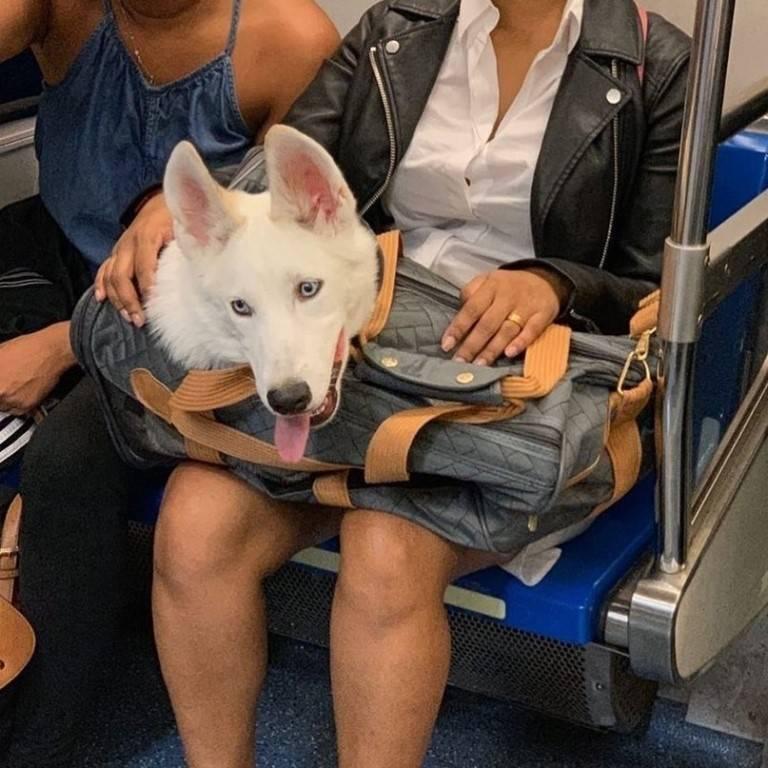 Можно ли с собакой в метро?