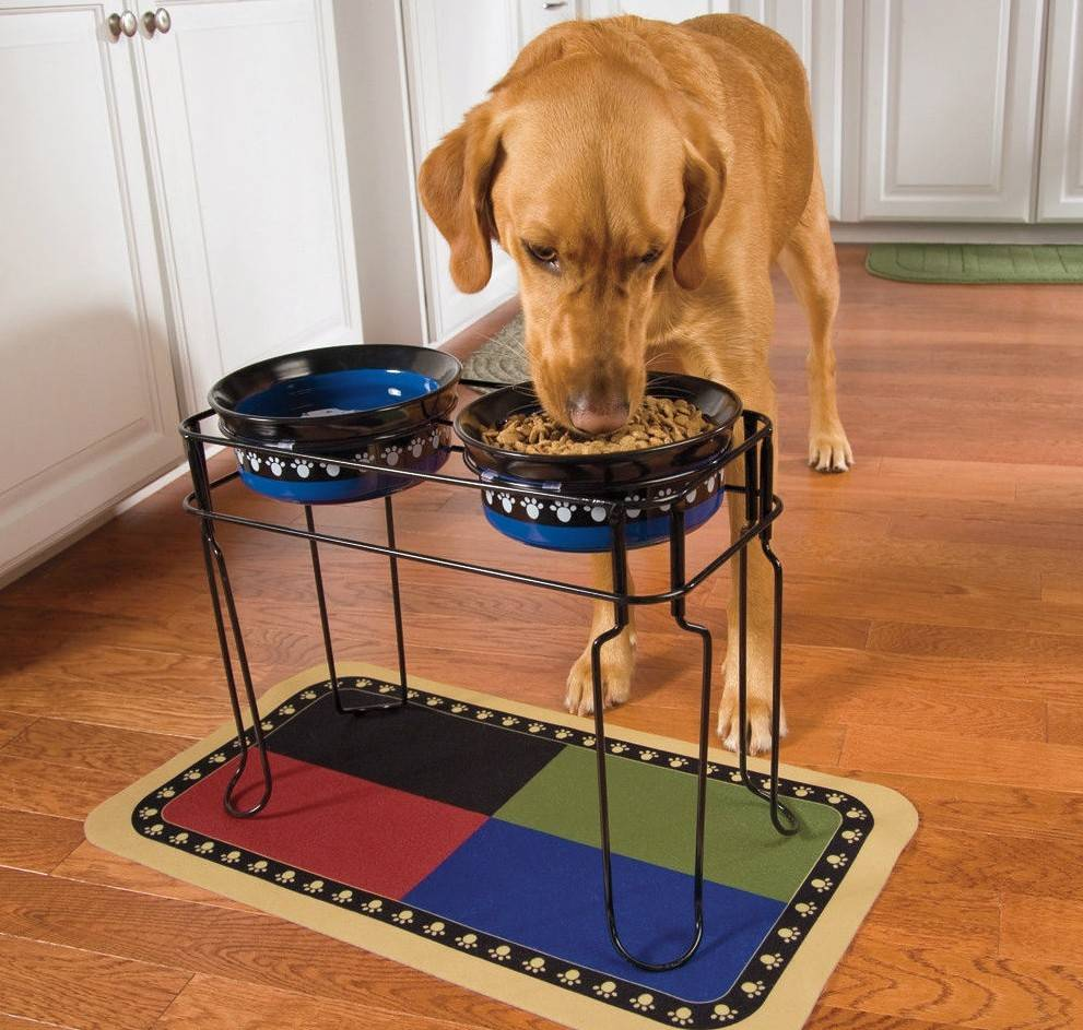 Миски для собак: какие лучше и как подобрать оптимальный вариант