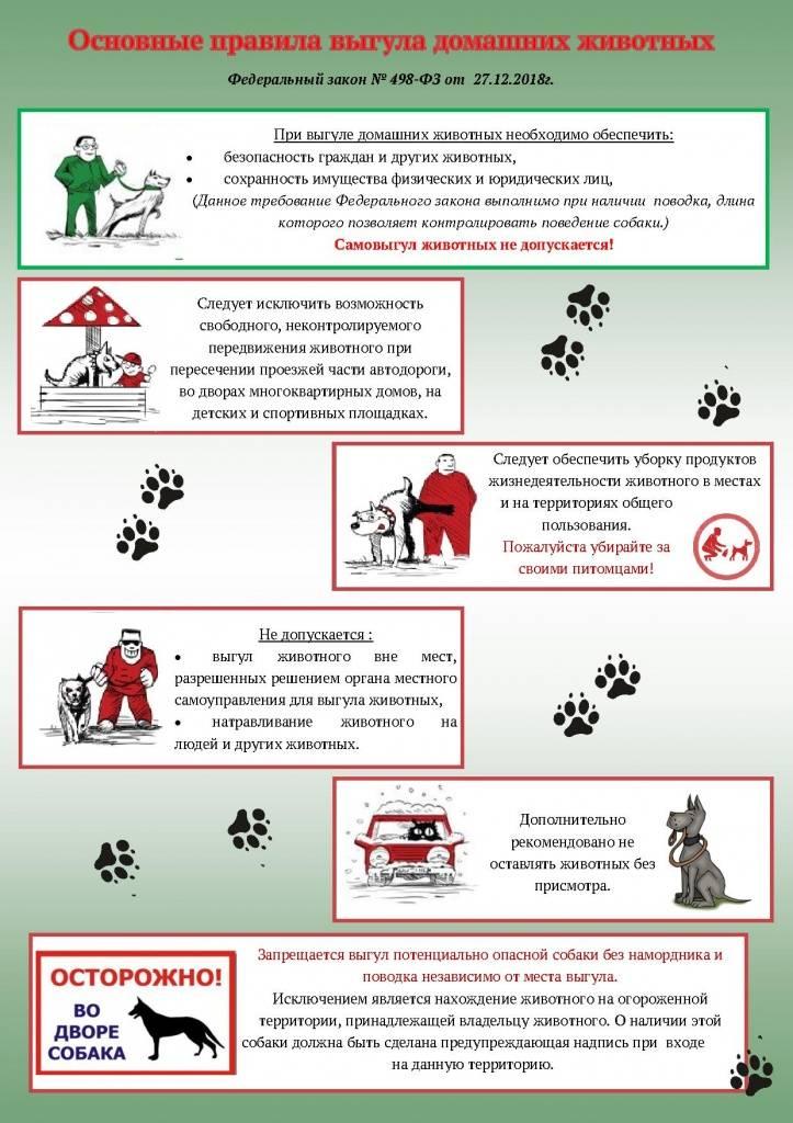Закон о выгуле собак на 2021 год: запреты, штрафы, поправки