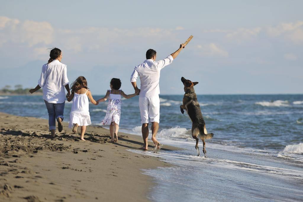 Можно ли с собакой на пляж: где разрешено, куда нельзя, правила поведения животных