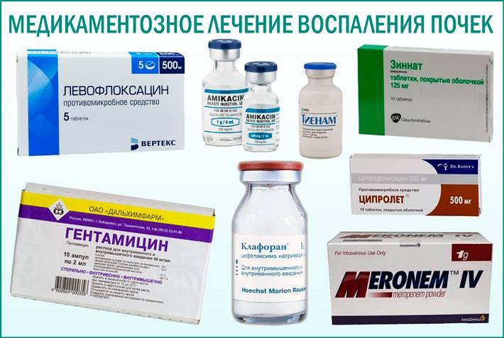 Пробиотики для животных : инструкция по применению   компетентно о здоровье на ilive