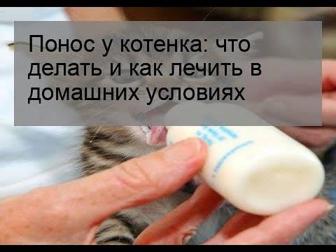 Понос у котенка - что делать?