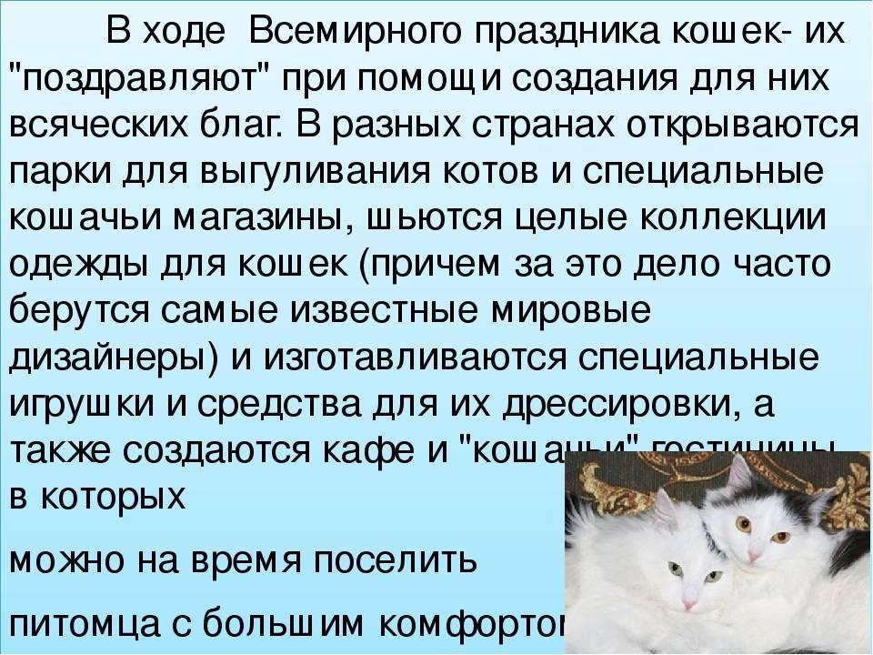 Всемирный день кошек: в разных странах, в россии всемирный день кошек: в разных странах, в россии