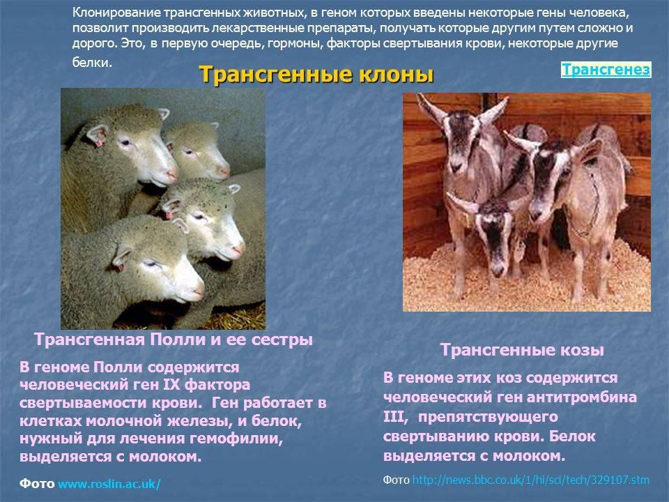 Клонирование домашних животных: история и научные примеры