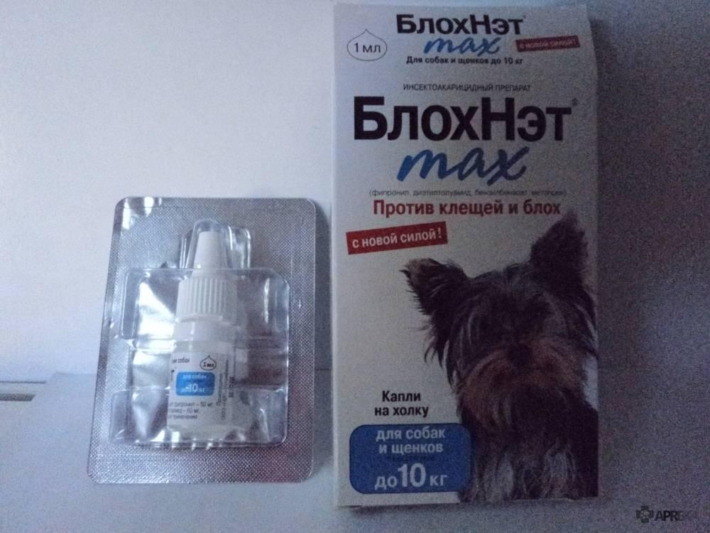 Блохнэт для собак: инструкция по применению, противопоказания и отзывы