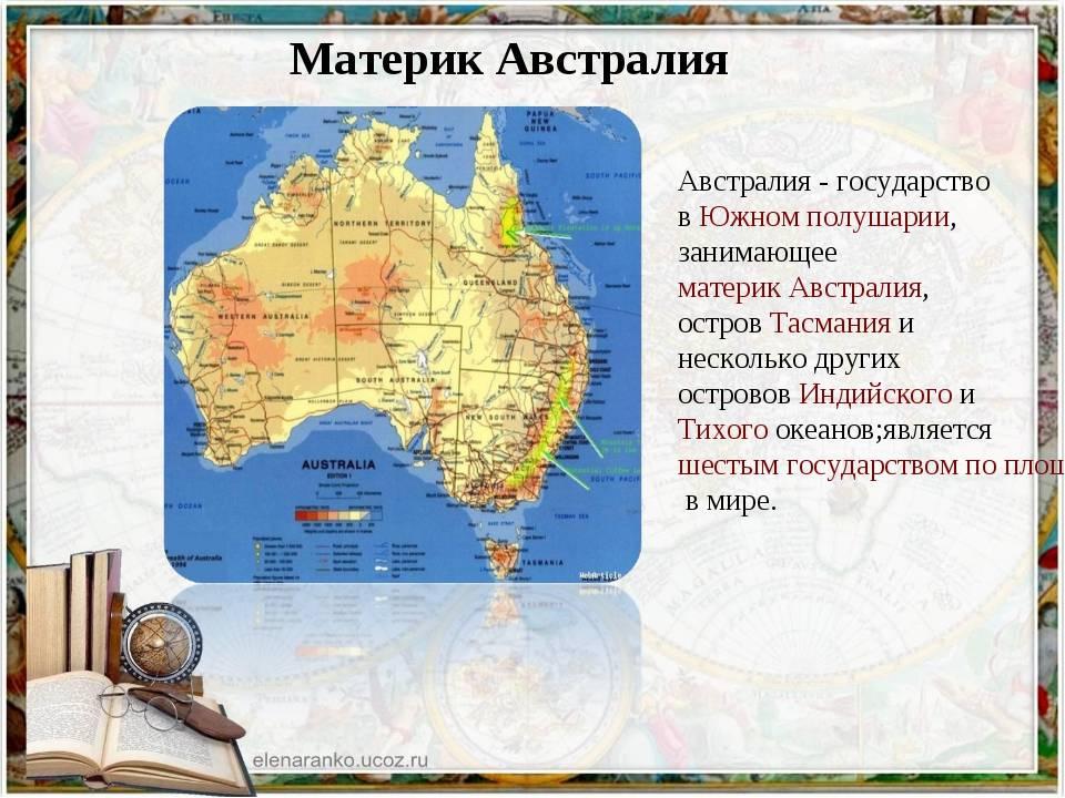 Австралийская дымчатая (австралийский мист) кошка: подробное описание, фото, купить, видео, цена, содержание дома