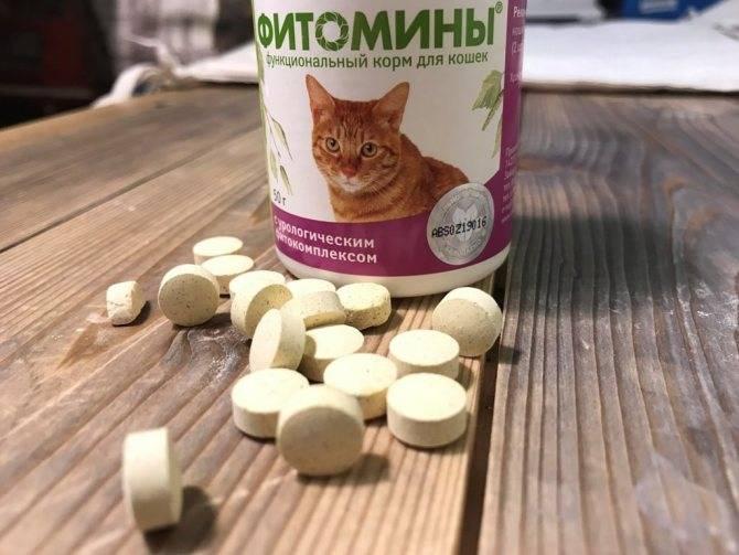 Какие человеческие витамины можно давать кошкам