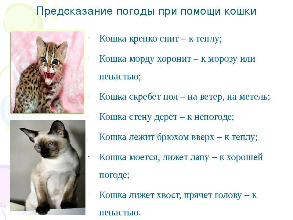 Зачем кошке хвост: строение, функции, значение движений, заболевания
