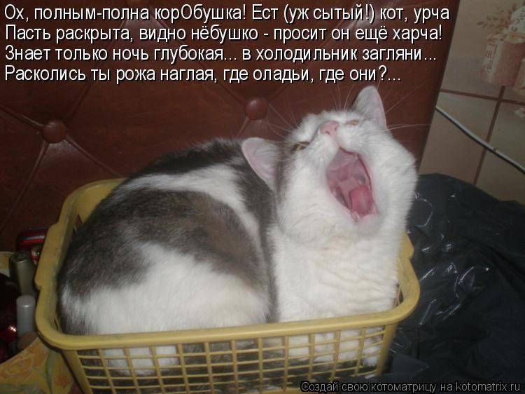 Почему орет кот: возможные причины и способы успокоить