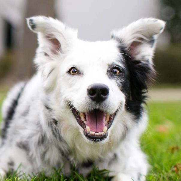 Самые умные породы собак — топ 10 с фото и названиями | «дай лапу»