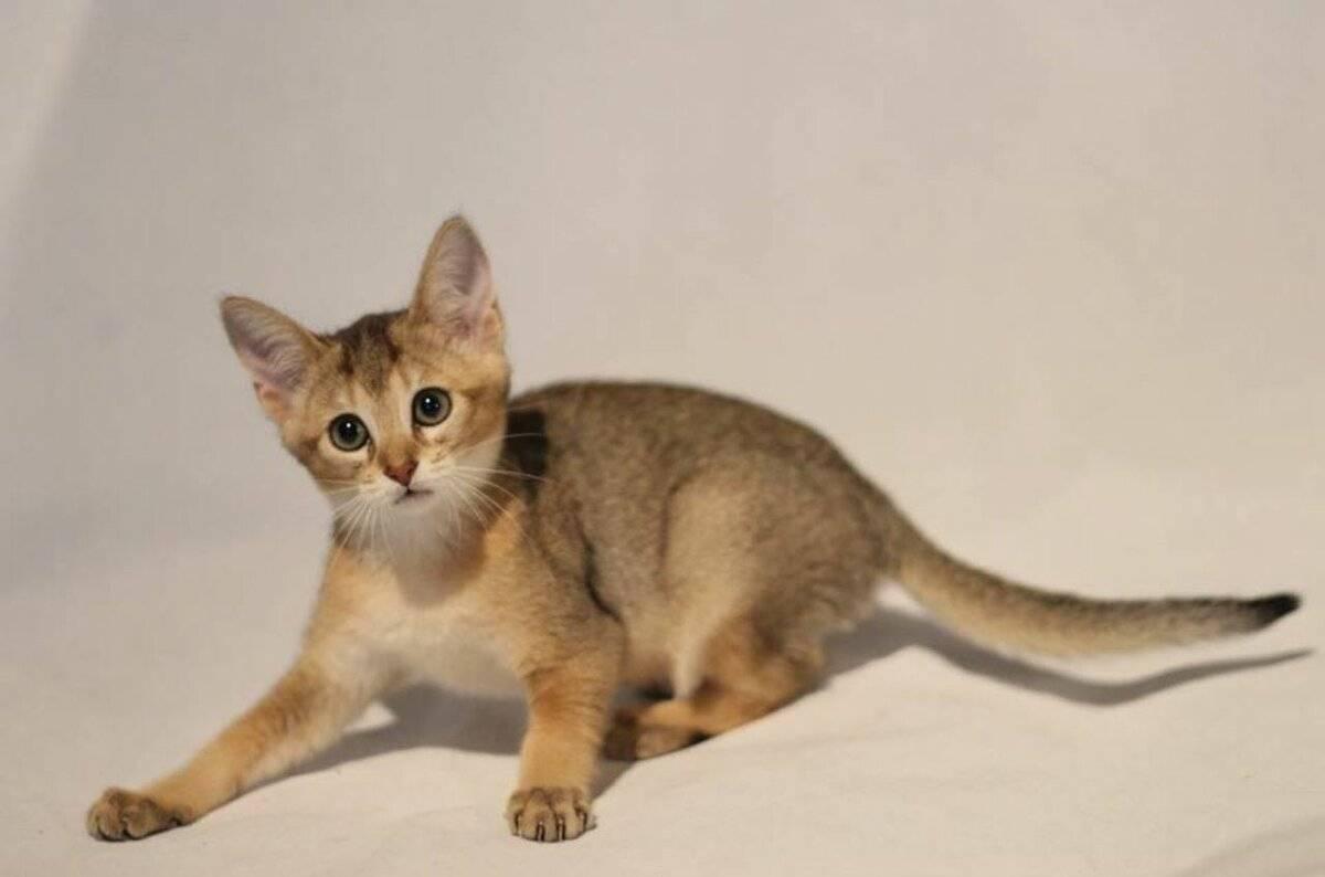 Какие из кошек считаются самыми ласковыми?
