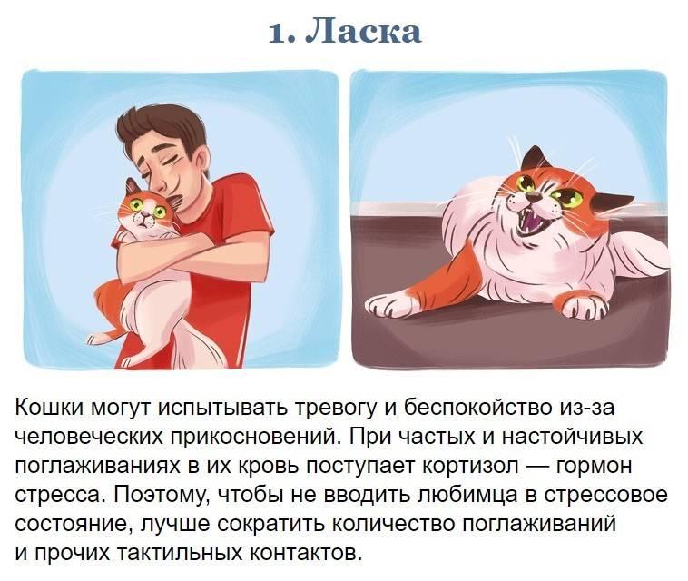 Кошки, несущие смерть. чем эти домашние животные опасны для человека