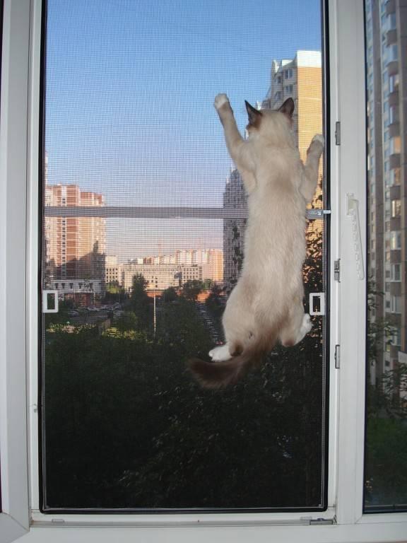 Травмы кошки