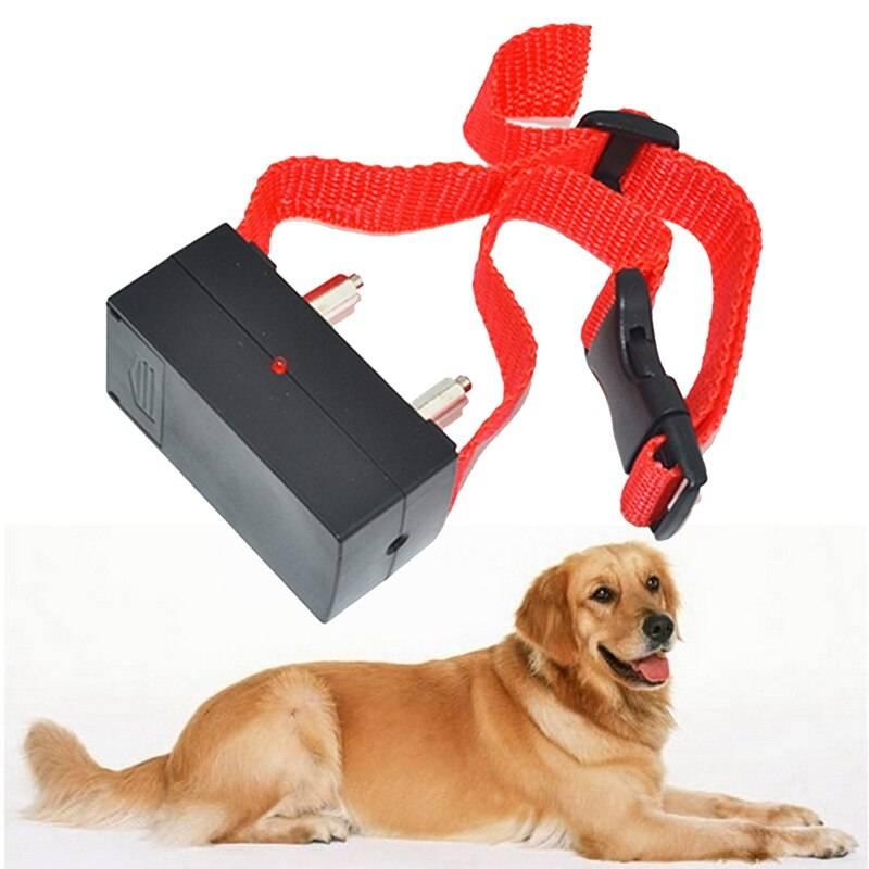 Ошейник для собак с электрошоком как важный атрибут послушания