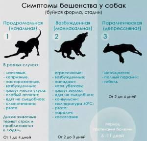 Рвота у собаки: причины и лечение