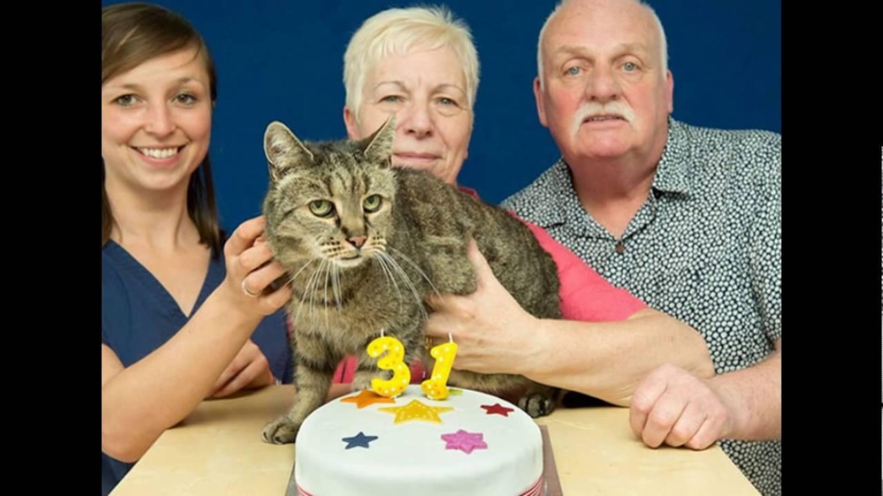 Сколько лет живут кошки и коты: средняя продолжительность жизни домашних питомцев и создание условий для долгожителя