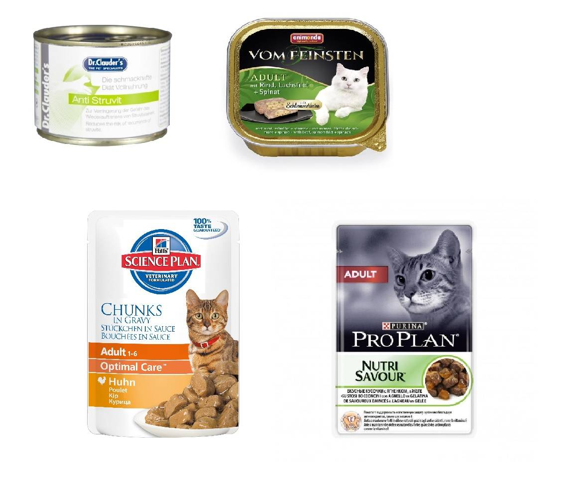 Можно ли кормить кошку сухим и влажным кормом?