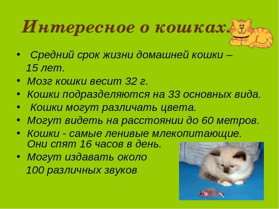Сколько живут кошки и как продлить жизнь своего питомца - лайфхакер