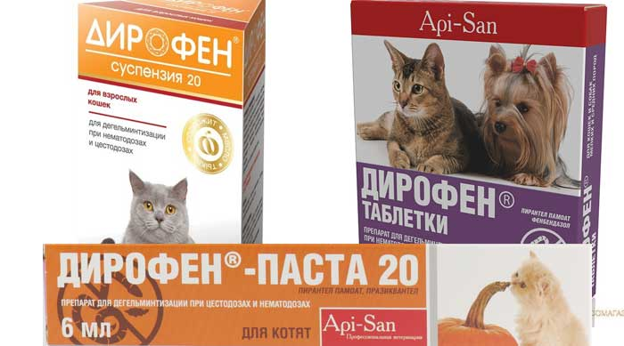 Дирофен для кошек: инструкция по применению