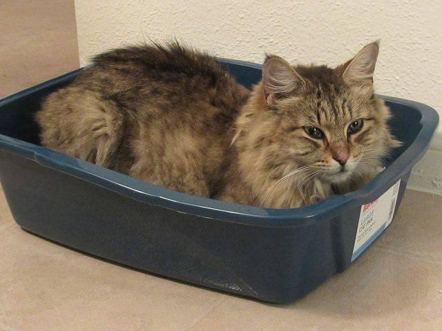 Кошка гадит на кровать — правильные действия хозяина что отучить