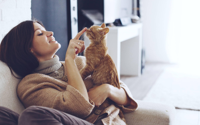 Почему кошки линяют и как бороться с линькой - gafki.ru